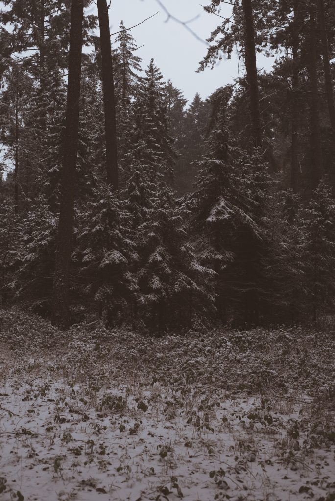 Winter Forest 2 Print